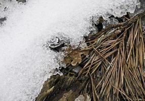 sneeuwveld natuur veld foto