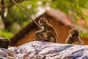baby aap zittend op de muur in de regen foto