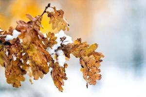 abstracte fotografie. witte sneeuw gevallen op gele herfstbladeren. foto