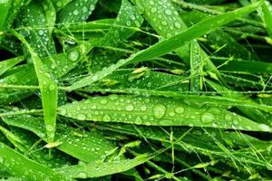 selectieve aandacht. beeld. close-up van vers groen gebladerte met waterdruppels na regen - afbeelding foto