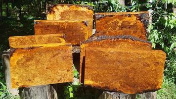 hout natuur afzelia wortelhout gestreept foto