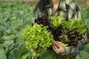 boer houdt groente groene rode eik vast foto