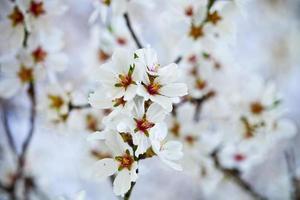 lente bloeit achtergrond foto