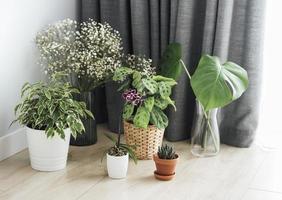 verschillende kamerplanten op de vloer foto