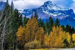 herfstkleuren in overvloed langs de Icefields Parkway. nationaal park banff, alberta, canada foto