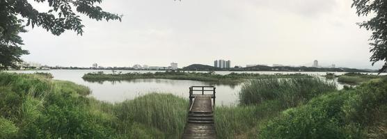 panorama. de houten pier begroeid met riet op het meer van de stad Sokcho. Zuid-Korea foto