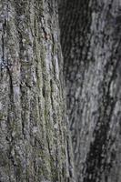 houtstructuur achtergrond. macro shot van schors met klein mos foto
