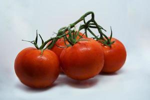 tomaten. tomaten tak. tomaten geïsoleerd op wit. met uitknippad. volledige scherptediepte. foto