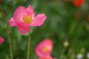 prachtige lentebloemen in de tuin foto