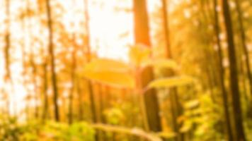 wazige foto's van natuurlijke landschappen in bossen en rijstvelden die er heel fris uitzien foto