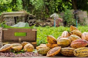 rauwe cacaobonen en cacaopeul op een houten oppervlak foto