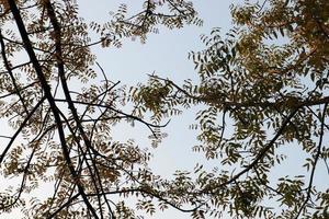 groen gekleurde bladvoorraad op tuin foto