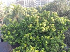 groene natuur met uitzicht op het gebouw foto