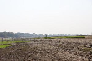 groen veld en grijze lucht foto