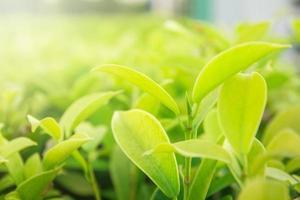 natuur laat groene achtergrond in de tuin in het voorjaar onder ochtendzon. natuurlijke groene planten landschap behang. foto