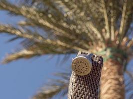 douchekop op de zee tegen de blauwe lucht en palm foto