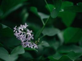mooie paars lila bloemen buiten foto