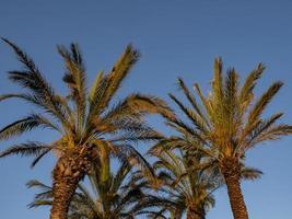 perfecte palmbomen tegen een mooie blauwe lucht. natuur tropische bomen foto