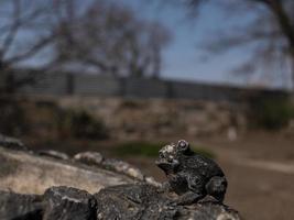 kleine kikker stenen figuur buiten foto