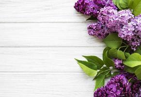 lila in vlakke stijl op witte achtergrond. mooie lente. bovenaanzicht. plat, boven. zomerseizoen. natuurlijke lentestijl. foto