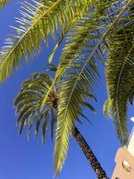 palmbomen onder de blauwe lucht, comunidad valenciana, spanje foto