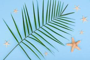 bladeren van een groene plant op een gekleurde achtergrond met een plek voor tekst foto