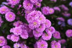 mooi van benjamas bloem achtergrond foto