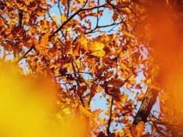 zonnig weer in het bos foto