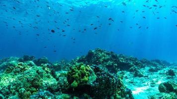 onderwaterscène met koraalrif en vissen. foto
