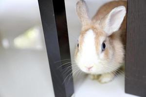 konijn in huis foto