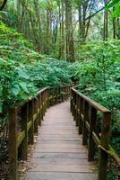 houten brug in het bos bij kew mae pan nature trail, chiang mai, thailand foto