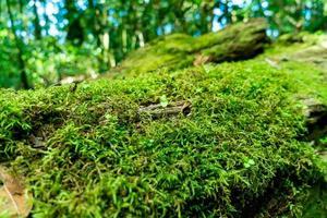 close-up groen mos op boom in het bos foto