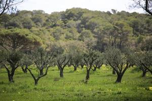 het groene en landelijke achterland van het eiland Porquerolles foto