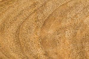 de houten achtergrond of textuur foto