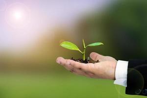 zakenman handen met jonge plant foto