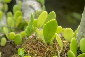 wilde planten groeien op mos foto