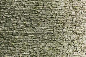 close-up mooie boomschors textuur foto