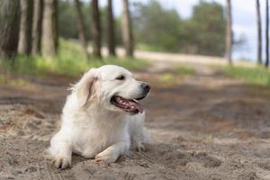 schattige hond buitenshuis. schattige smiley hond buiten foto