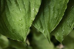 close-up groene bladeren natuur foto