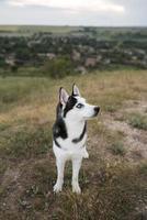 kleine hond die schattige portretstudio is foto