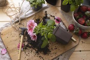 het tuinhuis met planten foto
