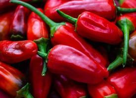 rode chili peper pittige groente foto