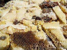 wax honingraat uit een bijenkorf gevuld met gouden honing foto