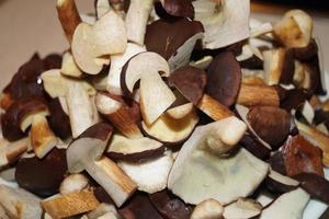 paddenstoelen uit de grond van een bos foto