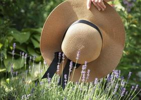 grote strohoed in de lavendelstruiken foto