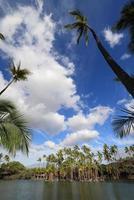 visvijver in kalahuipuaa historisch park op het grote eiland hawaï foto