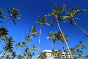 prachtig landschap van het eiland Hawaï, de kust van Kohala foto