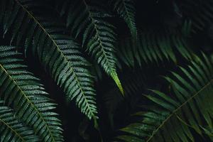 donkere varenbladeren in het tropische regenseizoen foto
