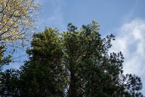 natuurlandschap met uitzicht op herfstbomen tegen de lucht foto
