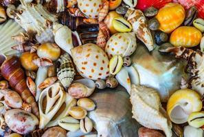 dode droge zeedieren en schelpen foto